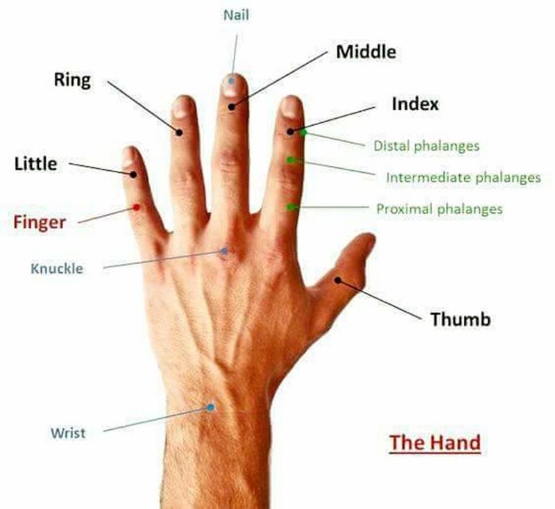 Как называются части тела по-английски